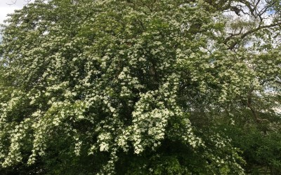 Trees – the very essence of life in the South Downs